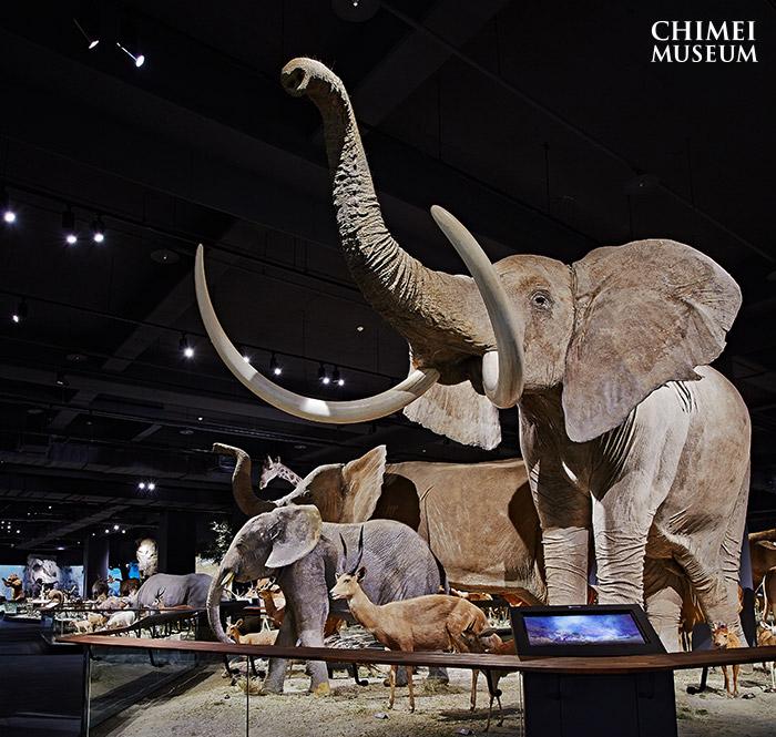 奇美博物館 動物廳